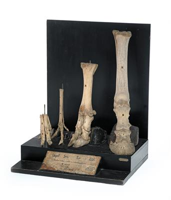 Four hoof & bone Models - Antique Scientific Instruments, Globes and Cameras