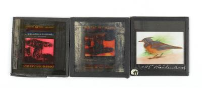 Mostly zoological glass slides - Antique Scientific Instruments and Globes; Classic Cameras