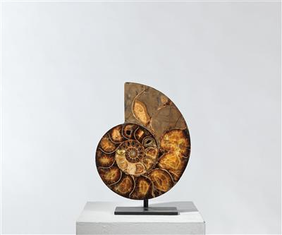 An Ammonite - Antique Scientific Instruments and Globes; Classic Cameras